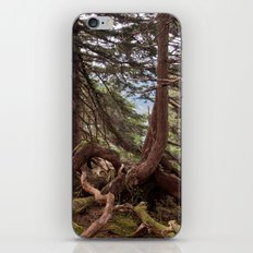 The roots iPhone & iPod Skin