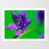 Purple & Green Art Print