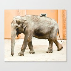 Smiling Elephant Canvas Print