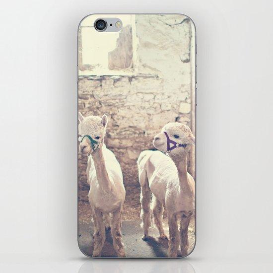 Young Alpacas  iPhone & iPod Skin