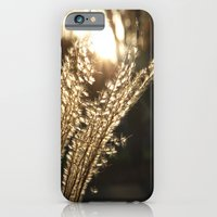Grasses in the Sun iPhone 6 Slim Case