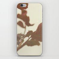 Raindrops And Rose Leave… iPhone & iPod Skin