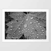 Drops Of Life Art Print
