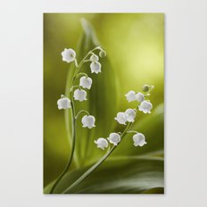 Lily of the valley Canvas Print