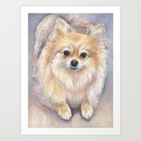 Pomeranian Watercolor Pom Painting Art Print