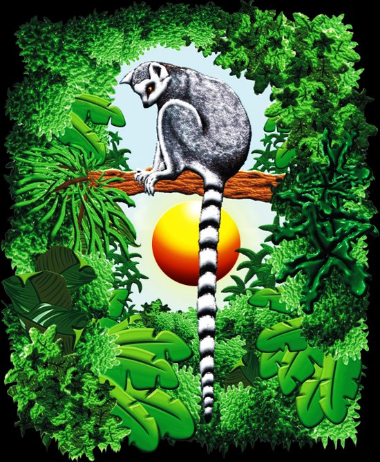 Ring-Tailed Lemur of Madagascar  Art Print