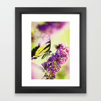 Butterfly Beauty Framed Art Print