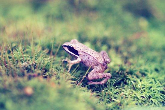 Frog & Moss Art Print