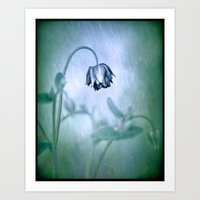 Aquilegia in the rain Art Print