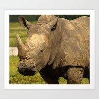 Sexy Rhino Art Print