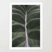 Money Plant Art Print
