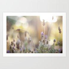 little lavender flower  Art Print