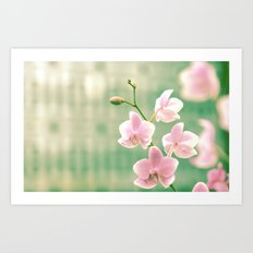 Orchid Ⅱ Art Print