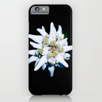 Single isolated Edelweiss flower bloom iPhone 6 Slim Case