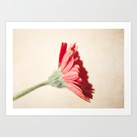 Textured Red Gerbera  Art Print