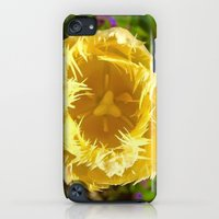 iPhone Cases featuring In Full Bloom by Shed63