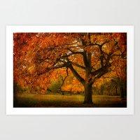 Red Oak Tree  Art Print
