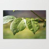 Fresh Dew Drops Canvas Print