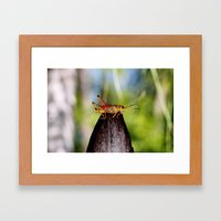 Precariously Perched Framed Art Print