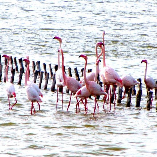 Flamingos dancing Art Print