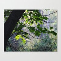 In The Shadow Of The Oa… Canvas Print