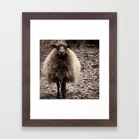 Sheep Stare Framed Art Print