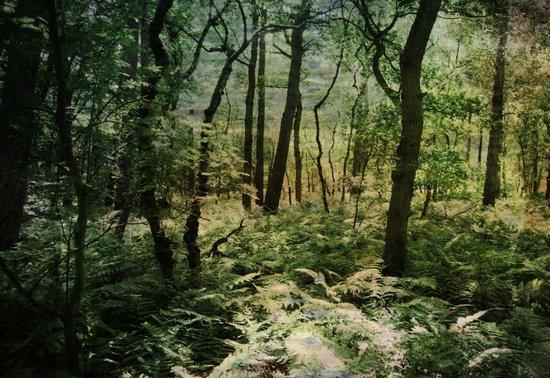 Woodland trees Art Print