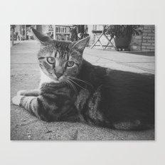 Street Kitty Canvas Print