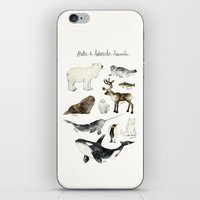 Arctic & Antarctic Anima… iPhone & iPod Skin