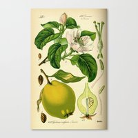 Botanical Print Canvas Print