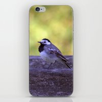 White Wagtail 4123 iPhone & iPod Skin