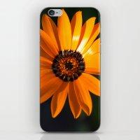 Vibrant Orange Flower iPhone & iPod Skin