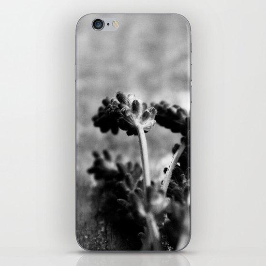 Lavender (Black & White) iPhone & iPod Skin