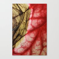 Decaying Begonia Rex Lea… Canvas Print