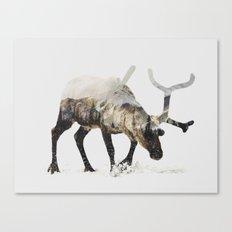 Arctic Reindeer Canvas Print