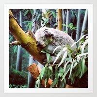 Kozy Koala  Art Print
