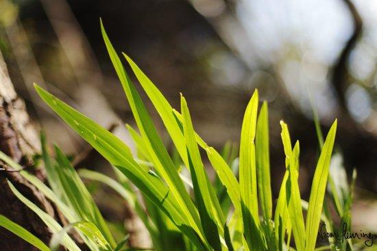 The Green Green Grass Art Print
