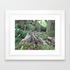 Log in the Woods Framed Art Print
