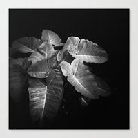 Elephant Ears In The Dar… Canvas Print
