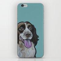 Bea the Springer Spaniel iPhone & iPod Skin
