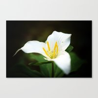 Flower Photography Trill… Canvas Print