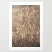 Sunset In The Field Art Print