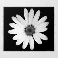 Greyscale Osteospermum Canvas Print