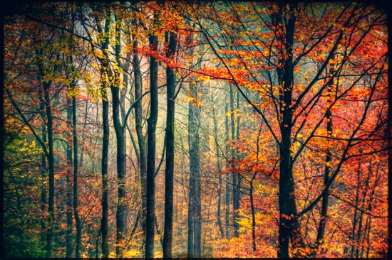 afternoon forest light Art Print