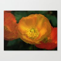 campari orange Canvas Print