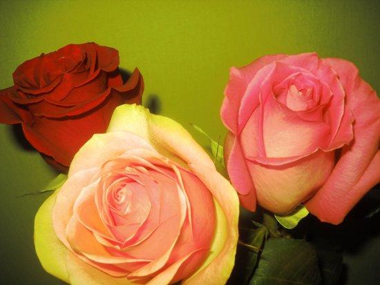 Trio Roses Art Print