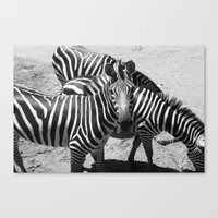 ~Zebra Stripes~ Canvas Print