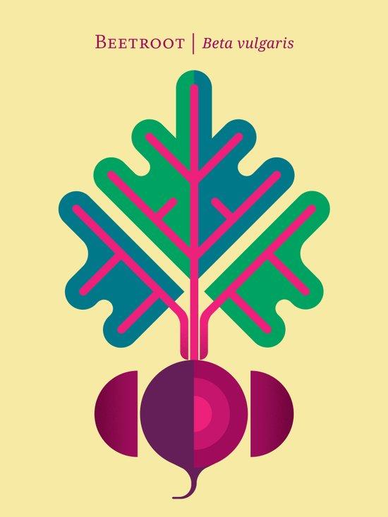 Vegetable: Beetroot Canvas Print
