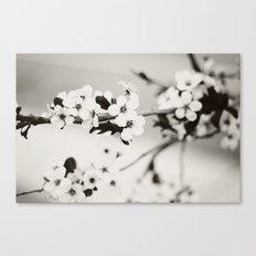 Cherry Blossoms (Black and White) Canvas Print