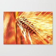 wheatfield Canvas Print